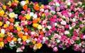 Закрытый каталог роз