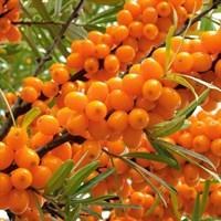 Облепиха Джемовая-оранжевый