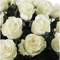 Роза Мондиаль-белый